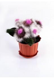 Изображение Цветы в горшке